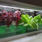 小型植物工場02