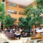 湘南鎌倉総合病院アトリウムロビー植栽